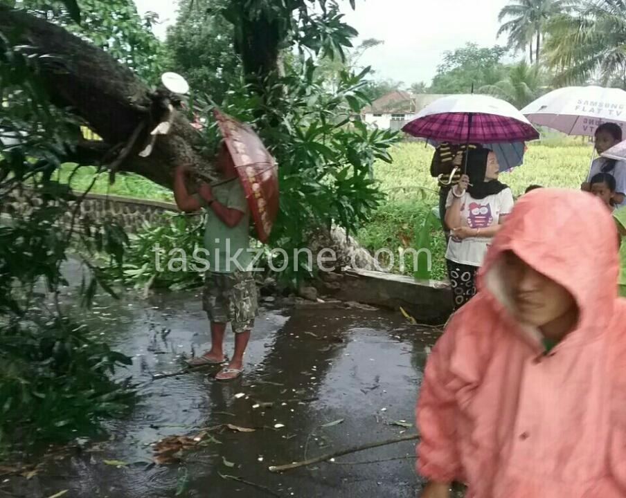 Angin Puting Beliung Di Purbaratu, Pohon Tumbang