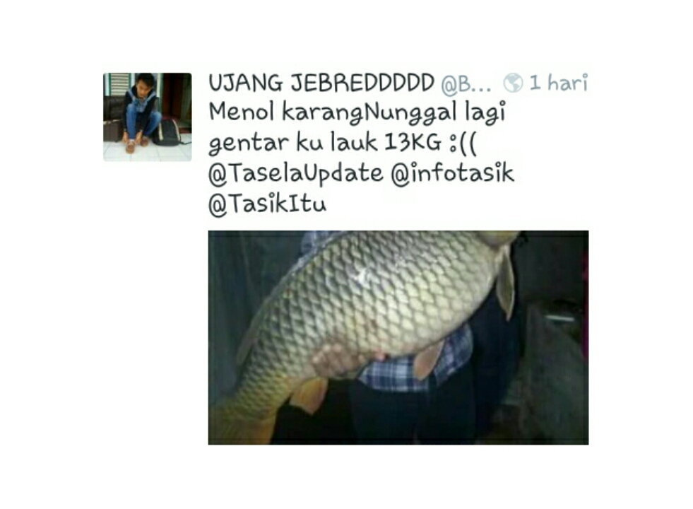 Netizen Digegerkan Ikan Mas Fenomenal