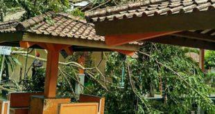 Siklon Tropis Dahlia Buat Pohon Tumbang Di Galunggung