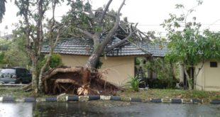 Akibat Hujan Dan Angin Kencang, Pohon Tumbang Timpa Kantor BPP Indihiang