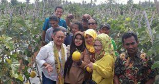 Panen Perdana Varietas Melon Hibrida Unggulan Mekarsari