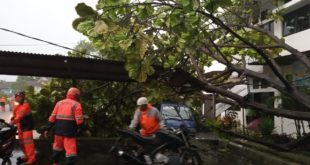 Hujan Lebat, Di Balaikota Pohon Tumbang Timpa Mobil