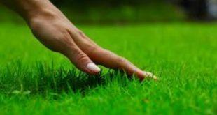 Benarkah Menginjak Rumput Tanpa Etika Akan Celaka