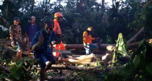 Hujan Lebat Disertai Angin Kencang, Pohon Timpa Rumah Di Kampung Gobang