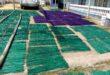 Menjaga Warisan Kerajinan Tradisional Tikar Mendong, Pertamina Dukung UMKM dengan CSR