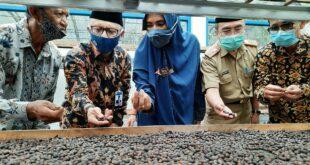Pemkab Tasik Siapkan MPIG Dengan Nama Kopi Arabika Java Sukapura Tasikmalaya