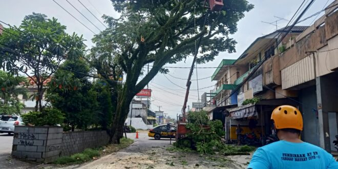 Dinilai Membahayakan, Pohon Di Pertigaan Cieunteung Di Eksekusi BPBD